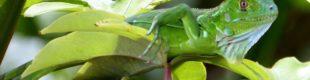 CRSJOCOSTARICA11_Costa_Rica_Costa_Rica___kurz_und_buendig6